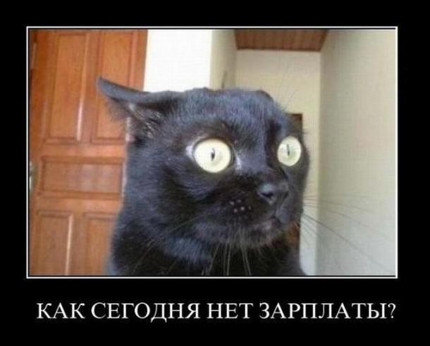 Интересные демотиваторы про котов (22 фото)