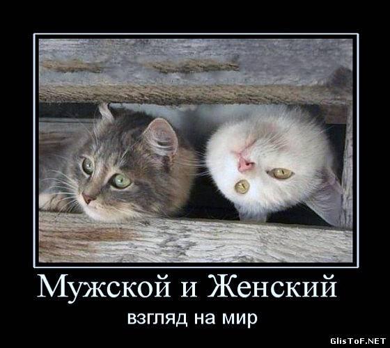 Интересные демотиваторы про котов с