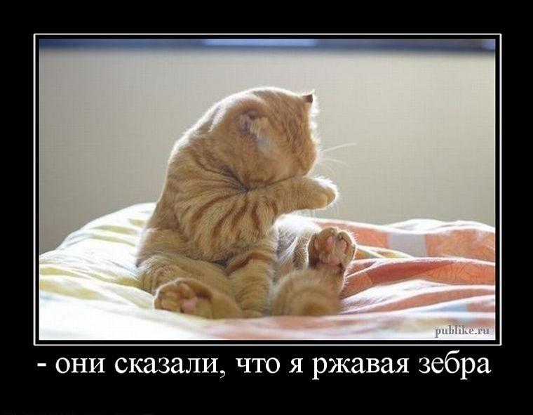Интересные демотиваторы про котов 22