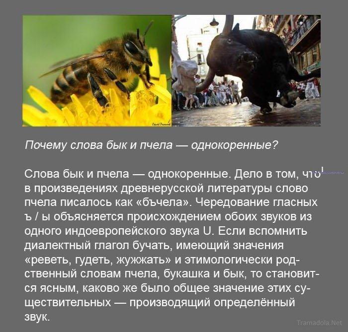 http://bygaga.com.ua/uploads/posts/1371735899_fakti_v_kartinkah_i_foto-12.jpg