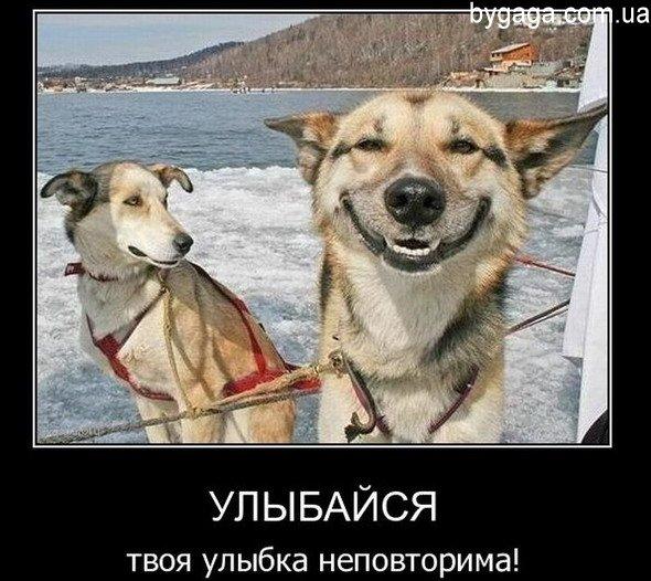 картинки прикольные хорошее настроение