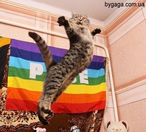 http://bygaga.com.ua/uploads/posts/2012-01/1326199932_x_8ee3365a.jpg