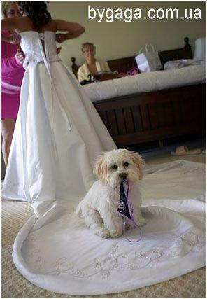 Приколы и курьезы на свадьбах