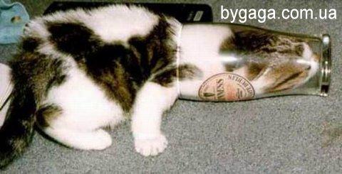Прикольные картинки и фото с котэ