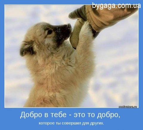... про добро и добрые поступки: bygaga.com.ua/pictures/motivators/2526-motivatory-pro-dobro-i...