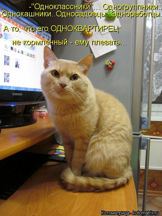 http://bygaga.com.ua/uploads/posts/2013-07/1374135807_prikolnye-kotomatricy-chetverga-6.jpg