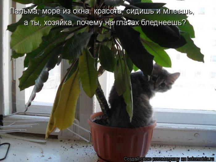 http://bygaga.com.ua/uploads/posts/2013-07/1375034884_kotomatrici_samie_klevie.jpg