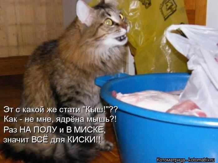 Добрые и смешные котоматрицы дня (34 фото)