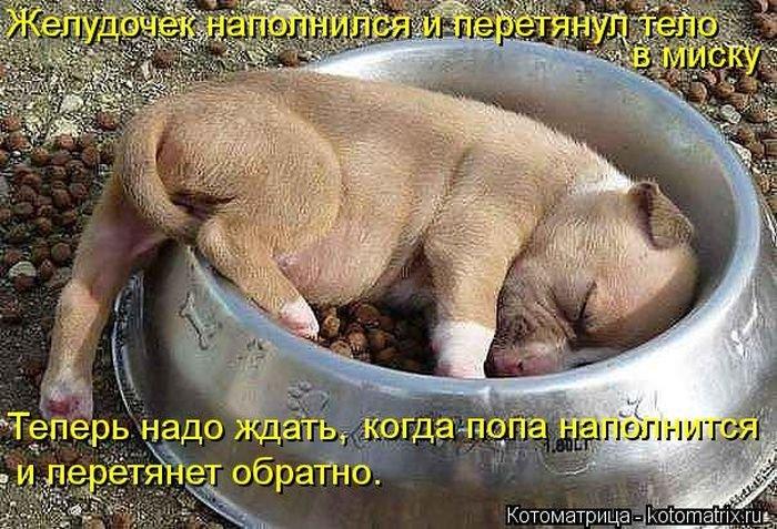 Утренние котоматрицы с юмором (35 фото)