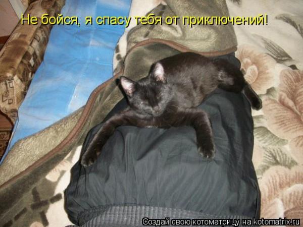Интересные и радостные котоматрицы (33 фото)
