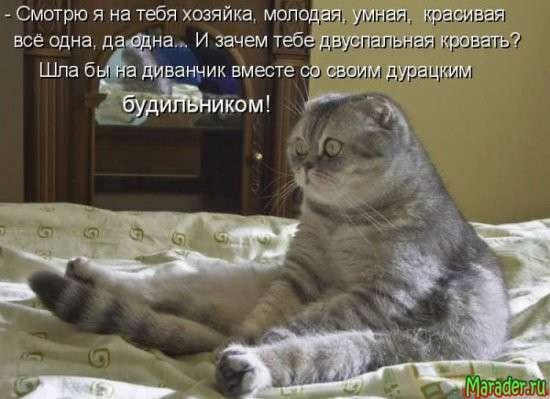 Светлые и добрые котоматрицы (28 фото)