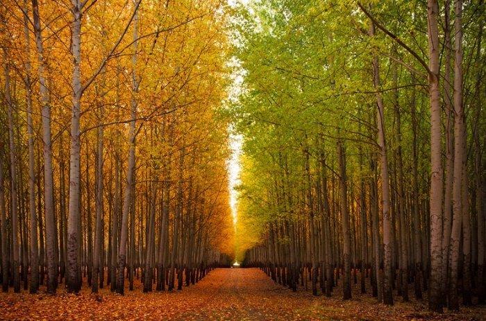 Лесное хозяйство boardman tree farm 12 фото