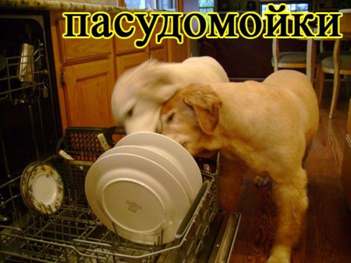 Собаки занимаются