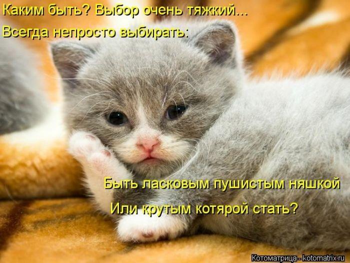 Я хочу, чтобы Вы улыбнулись. 1387116436_kotomatrici_pozitivnie_na_bygaga-31