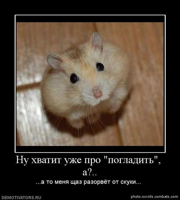 Демотиваторы про животных со смыслом