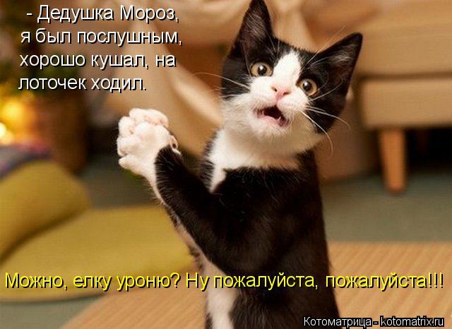 Я хочу, чтобы Вы улыбнулись. 1387908213_novye-otzhigi-v-kotomatricah-18