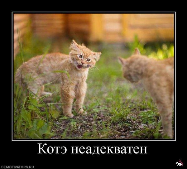 веселые картинки с животными: