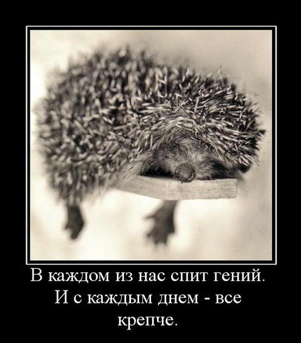 http://bygaga.com.ua/uploads/posts/2014-01/1389469360_klassnie_demovitatori_o_jivotnih-108.jpg