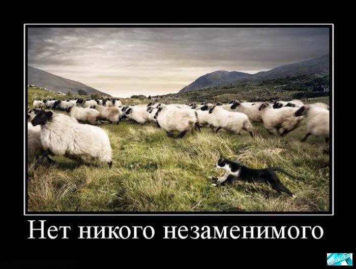 Демотиваторы про животных смешные 20