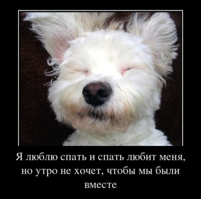 1389469964_klassnie_demovitatori_o_jivotnih-180.jpg