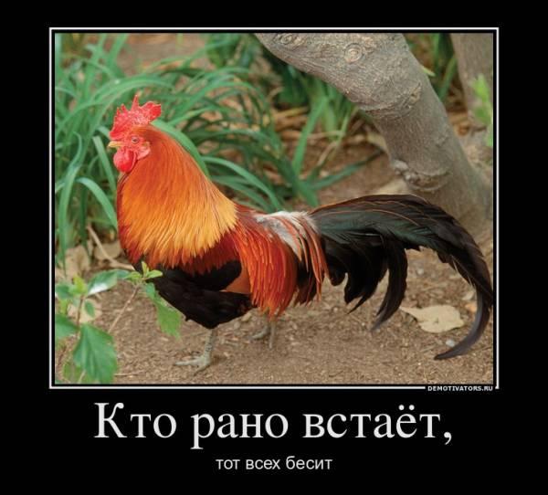 Демотиваторы про животных с юмором и