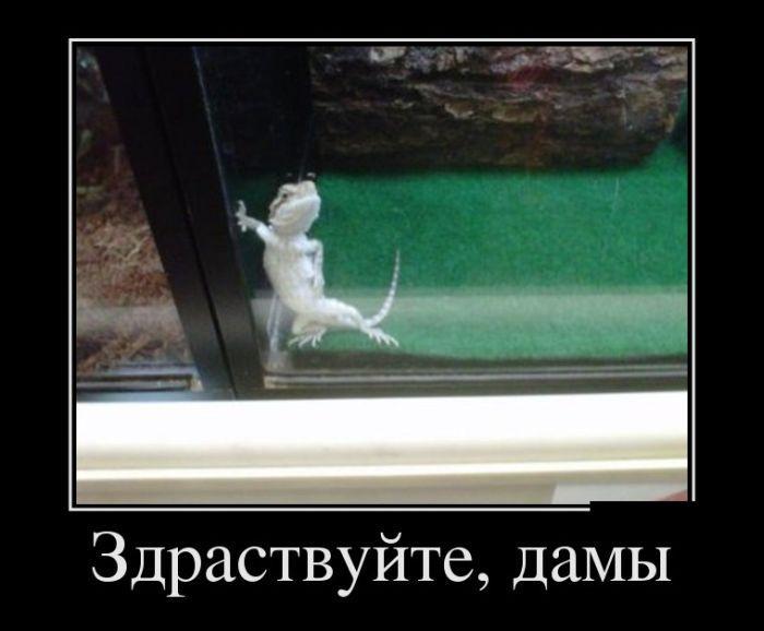 Демотиваторы про животных 16 фото