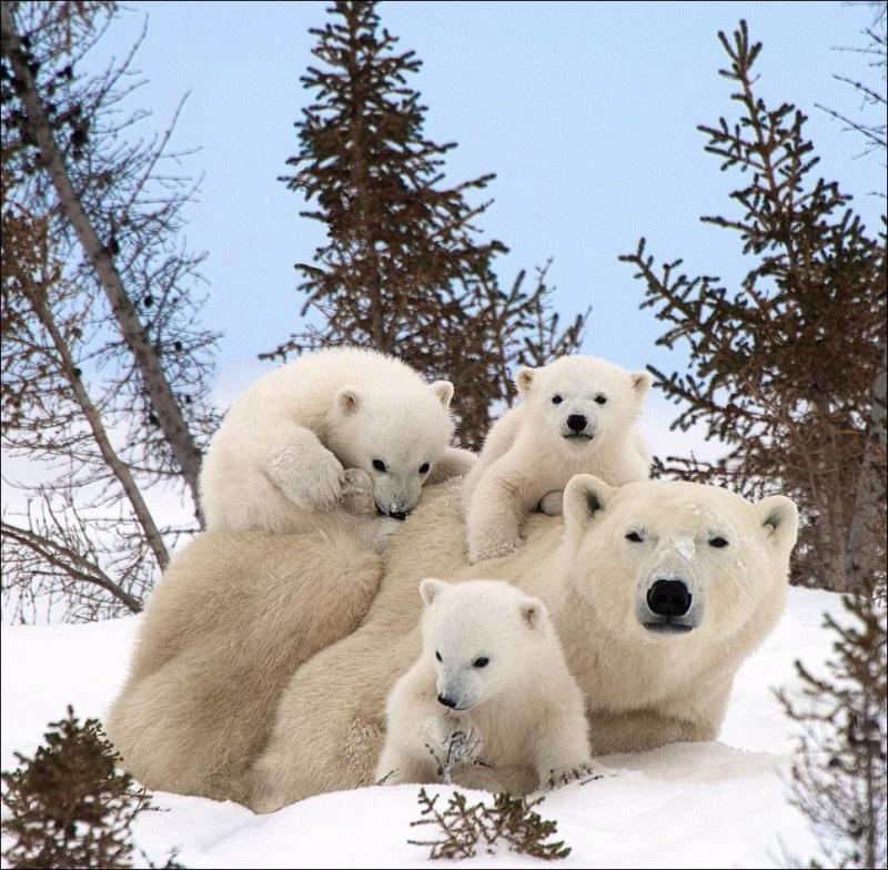 картинки милые медвежата нарисованные