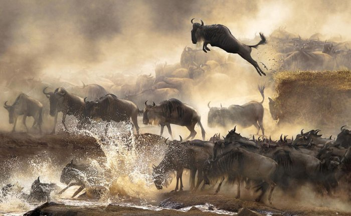 Sony World Photography Awards 2014 (15 фото)