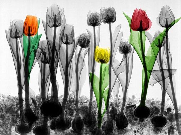 Искусство в виде рентгеновских снимков (10 фото)