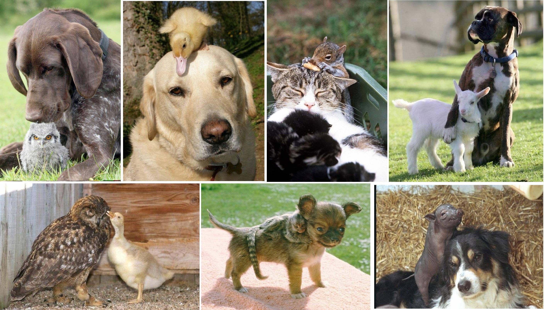 Животные разные фото 2