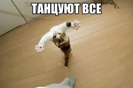 Картинка коты танцуют