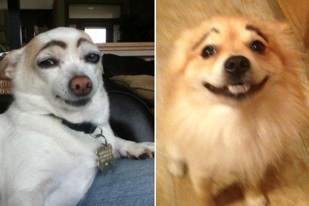 фото собаки с бровями