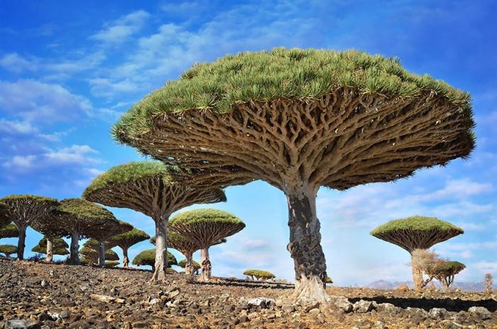 10 красивых и величественных деревьев