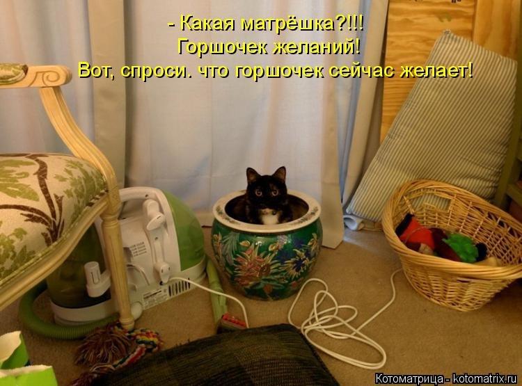 Самые смешные картинки с надписями и с котами