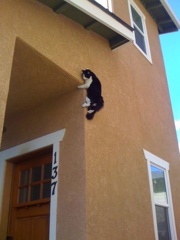 Коты, постигшие тайны ниндзя (20 фото)