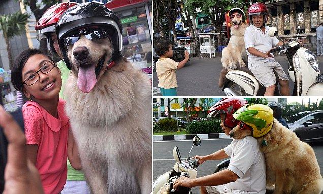Крутые собаки-байкеры (7 фото)