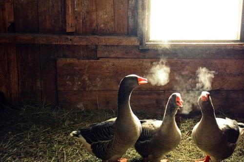 Вышли покурить, пообщаться (1 фото)