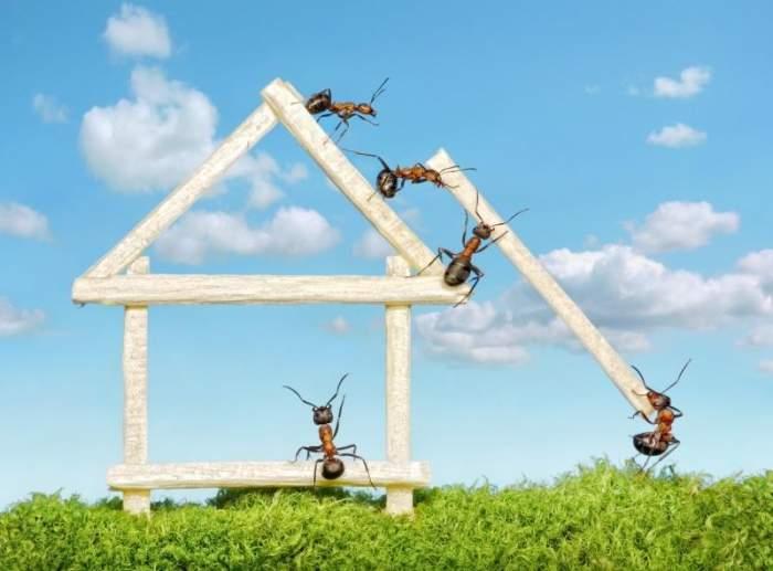 Красивая фотосессия с муравьями (32 фото)