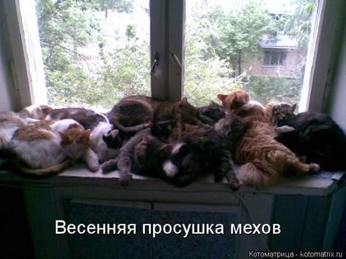 Утренние котоматрицы Бугага (18 фото)