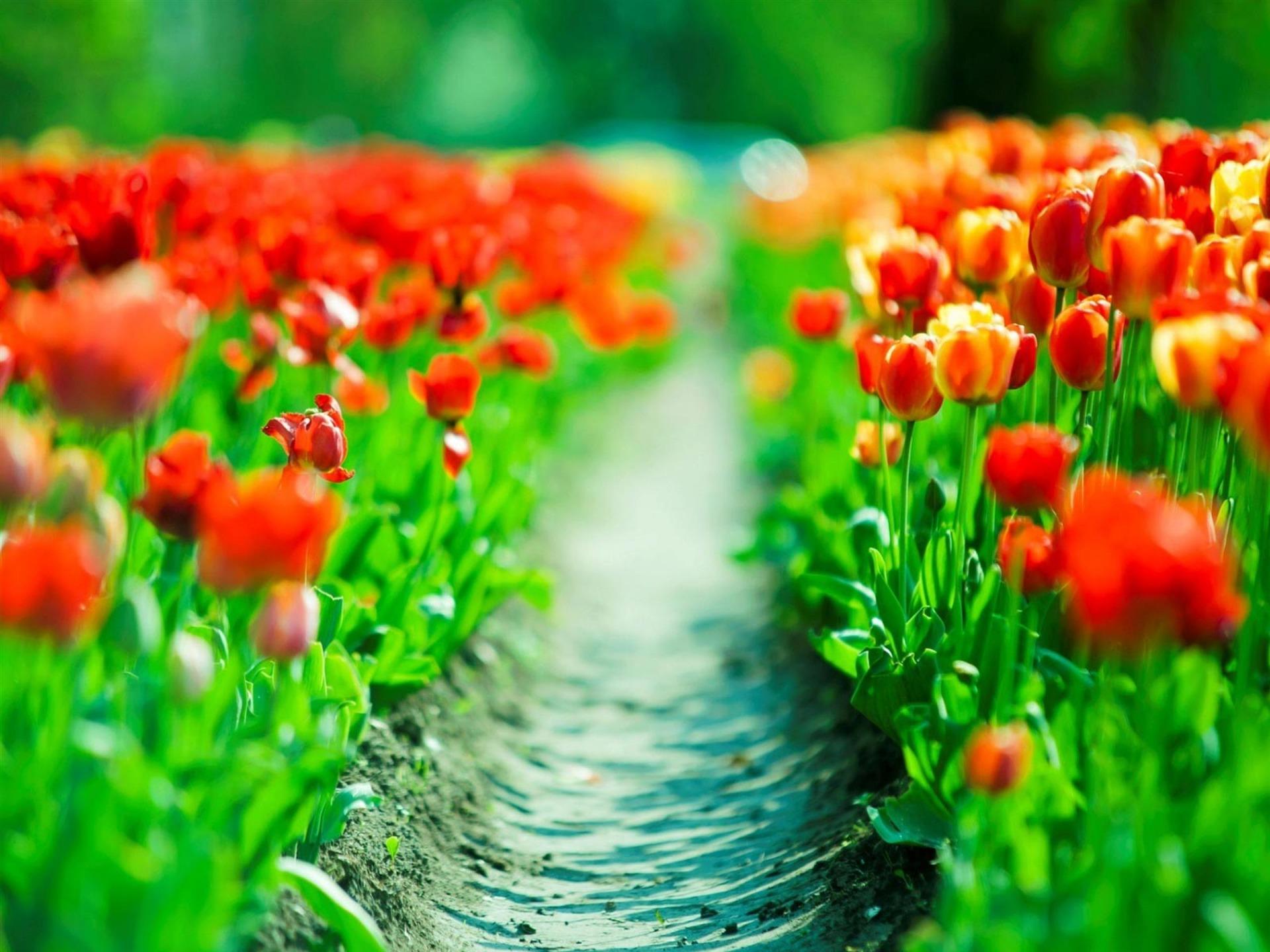 Картинки весны - 7
