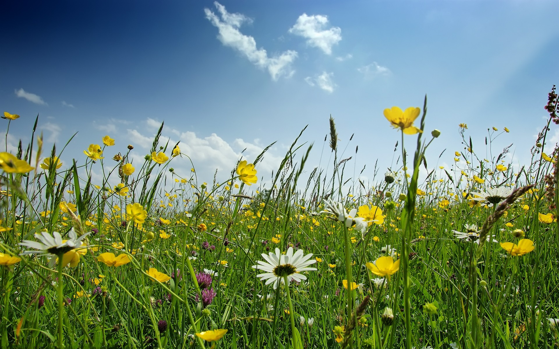 Картинки весны - 871d0