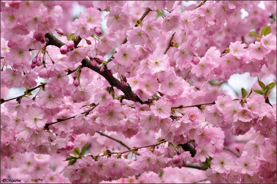 Красивые картинки весна!): http://bygaga.com.ua/vremena-goda/vesna/3563-krasivye-kartinki-vesna.html