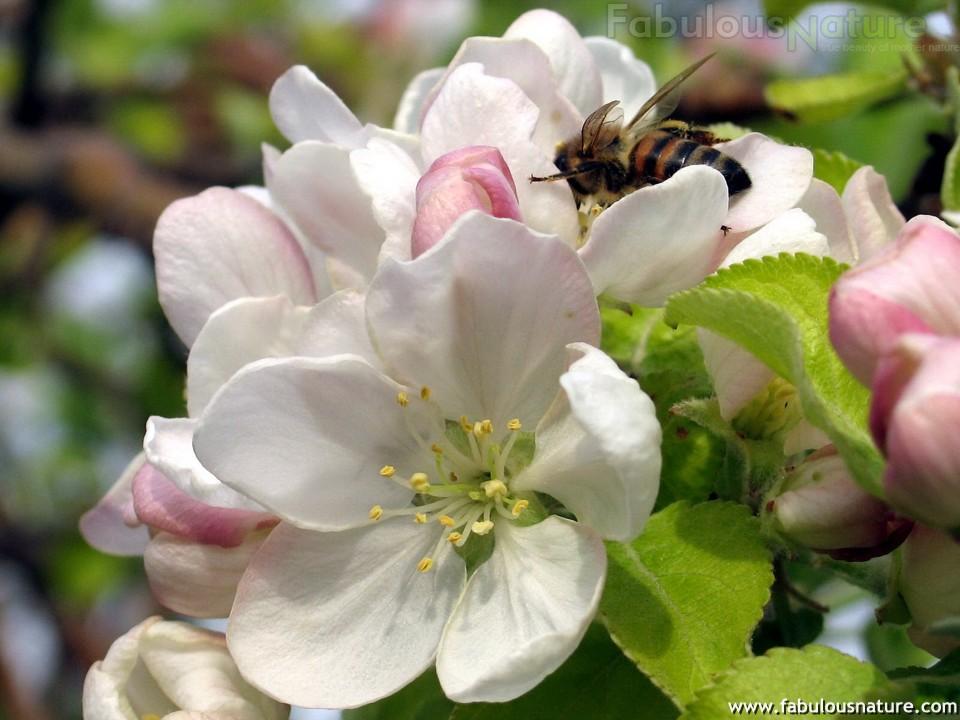 Красивые картинки весна!): http://bygaga.com.ua/vremena-goda/3563-krasivye-kartinki-vesna.html