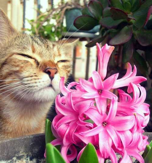 фото обои на рабочий стол весенние цветы