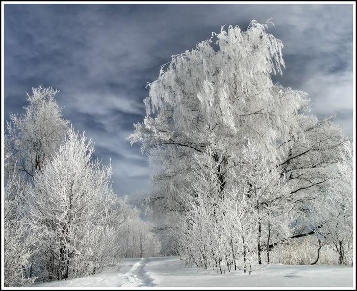 Красивая зима » пользователя Oльга
