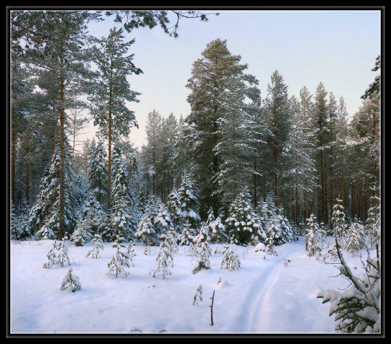 Красивые картинки зимы фото, иллюстрация зима скачать на Depositphotos