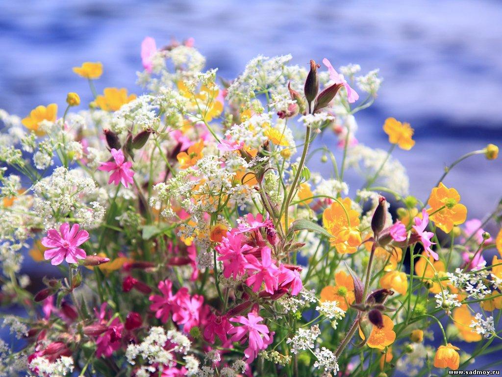 Картинки фото лето - f8
