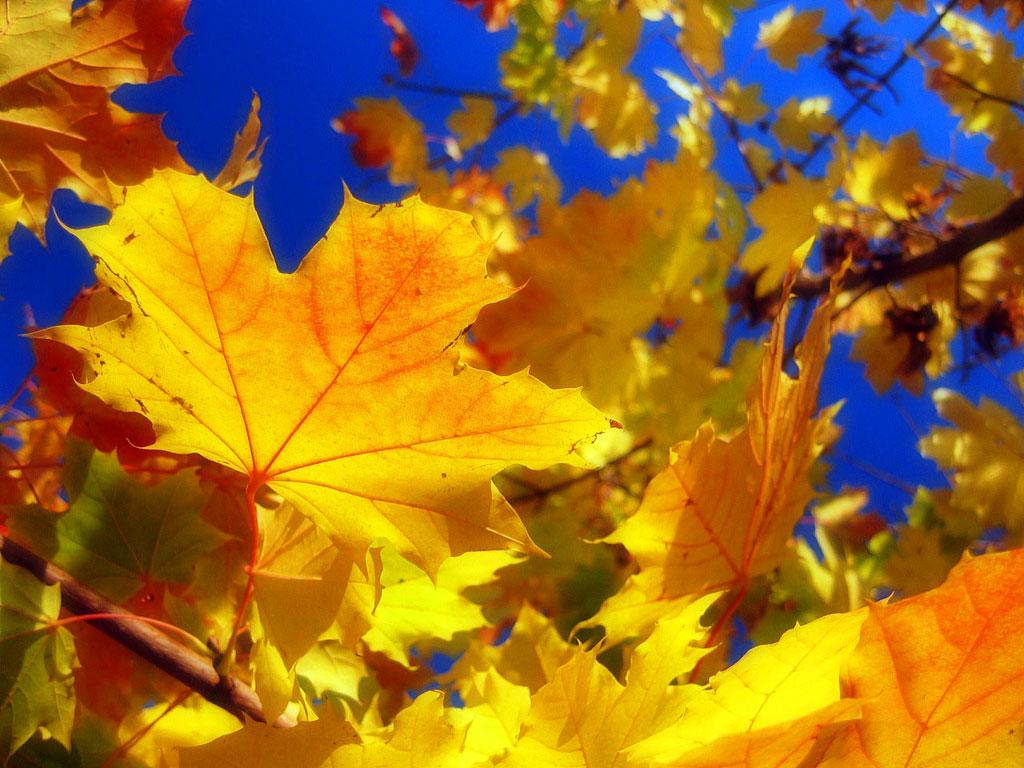 Скачать весёлые детские песни про осень.
