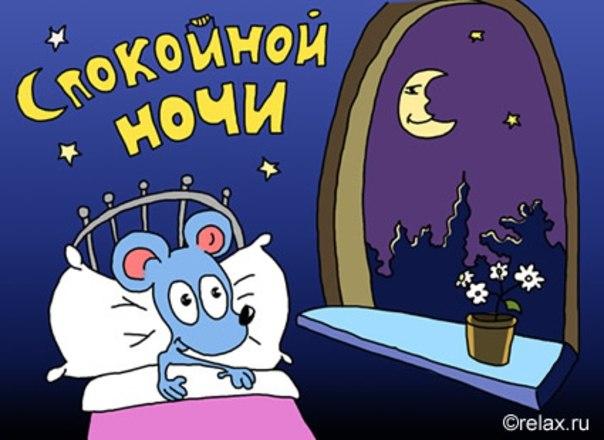 Смешное пожелания спокойной ночи фото 304-132