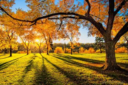 Картинки парка осеннего